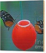 Feeding Butterflies Wood Print