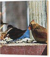 Feeding Frenzy Wood Print