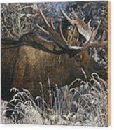 Feeding In The Snow Wood Print