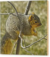 Feeding Tree Squirrel Wood Print