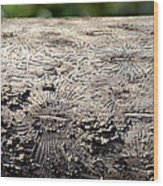 Fell By The Mighty Bark Beetle Wood Print