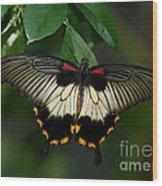 Female Asian Swallowtail Butterfly Wood Print