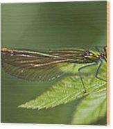 Female Banded Demoiselle Damselfly Wood Print