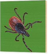 Female Blacklegged Tick Wood Print