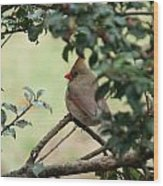 Female Cardinal Wood Print by Ron Smith