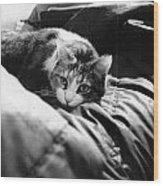 Female Cat Laying Down Wood Print