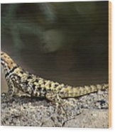 Female Desert Spiny Lizard  Wood Print