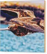Female Frigate Bird Wood Print
