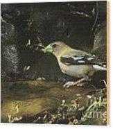 Female Grossbeak Wood Print