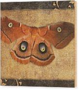 Female Moth Wood Print