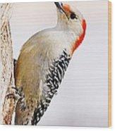 Female Red-bellied Woodpecker 2 Wood Print