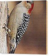 Female Red-bellied Woodpecker 5 Wood Print