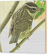 Female Red Breasted Grossbeak Wood Print