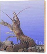 Female Rusty Crayfish Wood Print