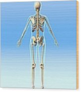 Female Skeleton, Artwork Wood Print by Roger Harris