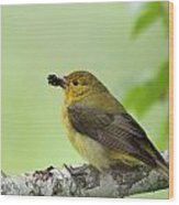 Female Summer Tanager Wood Print