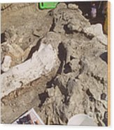 Femur Of Camarasaurus Covered Wood Print