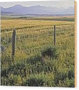 Fence And Barley Crop, Near Waterton Wood Print