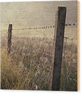 Fence And Field. Trossachs National Park. Scotland Wood Print
