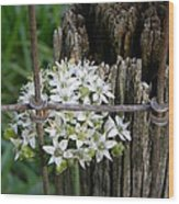 Fence And Flower Wood Print