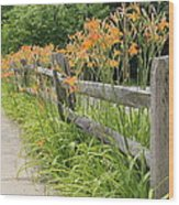 Fence Of Flowers Wood Print
