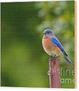 Fence Post Bluebird Wood Print