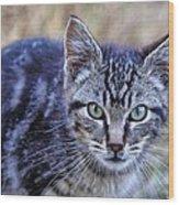 Feral Kitten Wood Print
