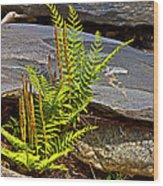 Fern And Rocks Wood Print
