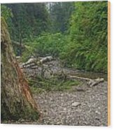Fern Canyon Trunk Wood Print