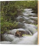 Fern Creek Horizontal Wood Print