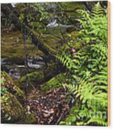 Fern Fallen Log And Stream Wood Print
