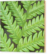 Fern Frond, Detail, Big Island, Hawaii Wood Print