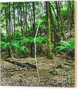 Fern Grove Wood Print