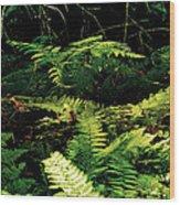Fern Gully Wood Print