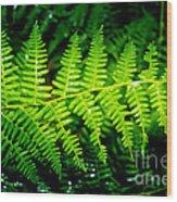 Fern II Wood Print