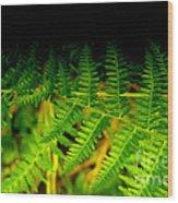 Fern IIi Wood Print