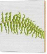 Fern Leaf Wood Print by Atiketta Sangasaeng