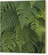Fern Leaves At Valdez, Alaska Wood Print