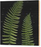 Fern Leaves With Water Droplets Wood Print
