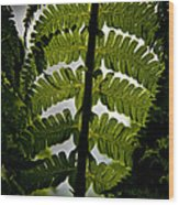 Fern Wood Print by Odd Jeppesen