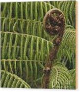 Fern Palm New Zealand Wood Print