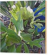 Fern With Blue Bucket Wood Print