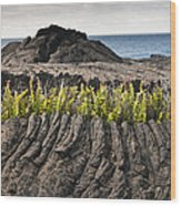 Ferns Growing From A Crack In The Lava Wood Print