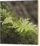 Ferns In Forest Wood Print