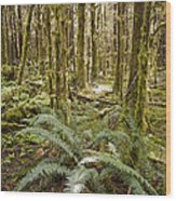 Ferns Sit On The Forest Floor Wood Print