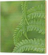 Ferns Take A Bow Wood Print