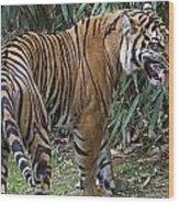 Ferocious Tiger Wood Print by Brendan Reals