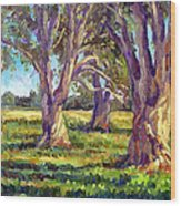Ficus Trees Wood Print