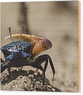 Fiddler Crab Living In A Sandy Tidal Wood Print