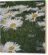 Field Daisies Wood Print
